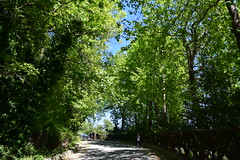 DSC_1148 (marirenaa) Tags: road trees plants plant tree nature forest landscape outdoors spring village outdoor greece volos