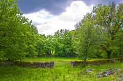 Sur le causse de Gramat (Denis Vandewalle) Tags: trees nature landscape spring lot arbres p paysage fort causse quercy midipyrnes