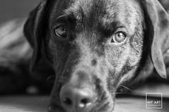 wat? (MyArt Fotografie by M.Raschke) Tags: bw dogs animals tiere hund sw