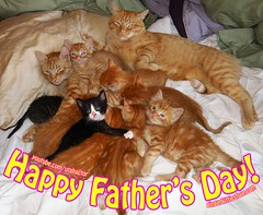 Happy Fathers Day! (youtube.com/utahactor) Tags: family pink red portrait orange cats pets black cute animals yellow female pose nose mackerel ginger blog chats feline adorable kittens fosters whiskers gato website precious kitties gata tabbies spotted rare striped tomcat viral chatons happyfathersday friendsofzeusandphoebe bestmeow gingerkittiesfour