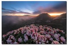 The spirit of a mountaineer,  , Taiwan (james wang photography - wangjam) Tags: flowers mountain rhododendron  hehuanshan   flowersmountain