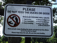 Do Not Feed (EX22218 - ON/OFF) Tags: food lake beautiful geese duck pond goose donotfeed migrate