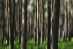 Healey Woods ICM (Chris Lishman) Tags: summer forest woodland northumberland dappled healey icm lishman incameramovement chrislishman chrislishmanphotography