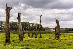 20160521_4138_Meers (Rob_Boon) Tags: tree netherlands boom maas limburg robboon