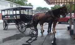 20160624_162006 (joyannmadd) Tags: amish buggy ride intercoursew pennsylvania farm kitchenkettlevillage lancaster pa