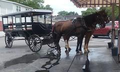 20160624_162006 (joyannmadd) Tags: amish buggy ride intercoursew pennsylvania farm kitchenkettlevillage lancaster pa