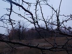 mystic (Stillhet A.) Tags: autumn awesometrees
