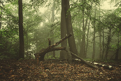 2016_06_04(09) (bas.handels) Tags: wood trees mist nature leaves fog soft moody forrest outdoor faded bos heerlen parkstad