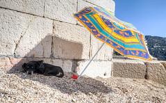 Villeggiando (tullio dainese) Tags: sea dog pet cane umbrella mare villefranchesurmer ombrellone animaledomestico