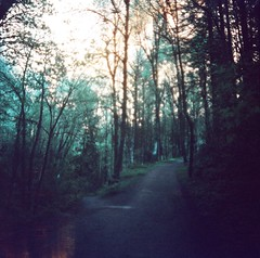 (liquidnight) Tags: trees nature oregon analog forest mediumformat portland lomo lomography woods solitude hiking turquoise toycamera surreal diana dreamy analogue dianaf vignetting pnw treescape forestpark dreamscape filmphotography lomochrome lomochrometurquoise lomochrometurquoisexr100400