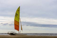 Dart15 (pel16931) Tags: sea holland beach water netherlands strand coast sand nederland noordzee zee northsea nl bergen noordholland zand egmond kust egmondaanzee egmondbinnen sonyilce6000