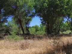 Jail Trail (EllenJo) Tags: pentax cottonwoodarizona 2016 june19 jailtrail 86326 ellenjo ellenjoroberts pentaxqs1