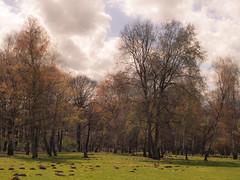 The Deer (Netsrak) Tags: trees cloud tree nature clouds forest de landscape deutschland woods outdoor natur meadow wiese wolke wolken deer landschaft wald bume baum nordrheinwestfalen reh rehe forst mechernich