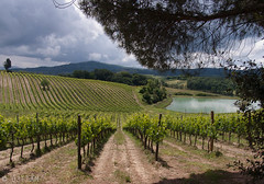 CRW_7511-1 (03TTAM) Tags: landscape toscana paesaggi vigna filari viafrancigena