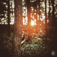 Masquerade (Lichtrebell) Tags: sunset portrait green nature sunshine forest mask bokeh hamburg portrt hideandseek hidden mystical wald venezia gegenlicht maske brenizer redsun bokehrama grn bokehpanorama brenizermethod venezianischemaske