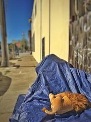 (Sharon Hahn Darlin) Tags: lion stuffedanimal discarded