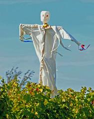 20100919-Scarecrow6c-1114 (deacondana) Tags: newyork vineyard scarecrow fingerlakes 2010