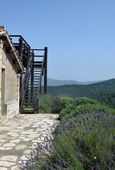 DSC_3854 (erinakirsch) Tags: italy castle landscape florence vineyard view wine vine winery vineyards views tuscany toscana grape grapevine florenceitaly frescobaldi winegrapes nipozzano