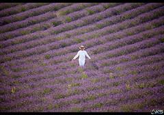 Surrounded by lavender (Karim SAARI - Photography) Tags: summer france tourism landscape photography landscapes marseille lavender provence paysage lavande alpesdehauteprovence lavandes bouchesdurhone valensole 500px ifttt