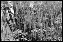 2016-07-02-0072 (Cosmic Ray's) Tags: mountains 35mm nationalpark kodak olympus wetlands vintagecamera marsh wyoming scanning tetons nationalparks jacksonhole hikingtrail grandtetonnationalpark usnationalparks tx400 phelpslake jacksonwy rockefellerpreserve epsonv600
