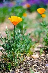 Meadow (David Doua) Tags: flowers orange flower green meadow d7000