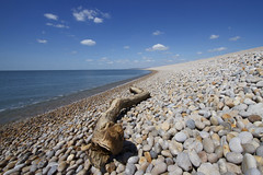 Beach Snake (Rob Briant) Tags: beach portland coast snake dorset jurassic chesilbeach chesil jurassiccoast