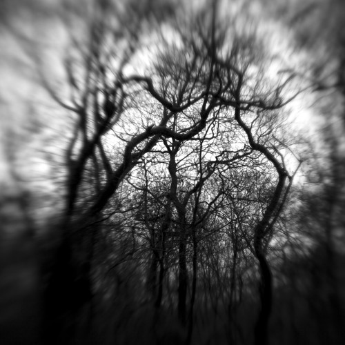Nether Wood 56 - Untitled