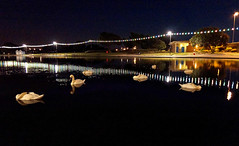 Sshhhh ! The swans are sleeping (southseadave) Tags: night reflections lights swans portsmouth nightshots canoelake southsea a65 sleepingswans sal18250 canoelakesouthsea handheldtwilightsetting alpha65