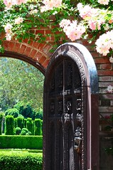 Filoli Gardens: Arched Doorway with Pink Evergreen Camellia Shrubs (Lynn Friedman) Tags: california pink plants brick wall gardens camelias vine climbing doorway evergreen camelia serene camellia woodside shrubs filoli 94062 camellias arched lynnfriedman