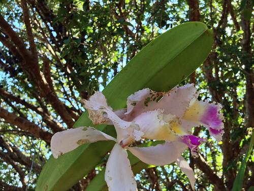 Flor numeber three