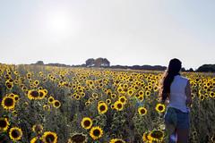 Campo de girasoles (en Torrescarcela Valladolid) (ex-otico) Tags: