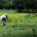 Woodland Horse