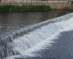 Wetherby Weir (jcl34) Tags: seagulls water stone river reeds pigeons riverwharfe wetherby