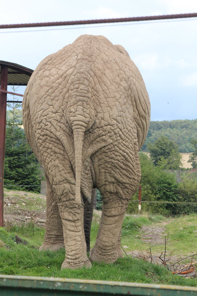The world 39 s best photos of elephant and wrinkle flickr hive mind - Elephant assis ...