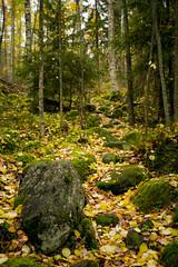 Kivinen polku (maaniemi) Tags: autumn 3 canon suomi finland eos mark iii foliage mk2 5d mk syksy tero mkiii mk3 mark2 mark3 markiii ruska maaniemi muuratsalo paljasp