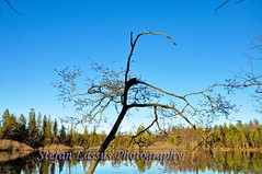 DSC_2733 (Salmix_ie) Tags: autumn lake fall beauty forest mirror lough relaxing scenic peaceful tranquility calm serenity skog hst sj jrvi pohjanmaa sterbotten oravainen oravais ostrobotnia karvat