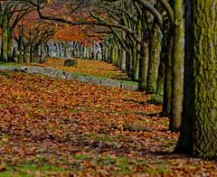 Leave's will fall.Explored (Omygodtom) Tags: park autumn tree fall nature leaves season leaf nikon branch pdx 70300mm