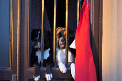 DSC_0178 (HectorBcN - Nikon D5200) Tags: dogs nikon perros d5200