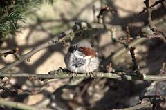59/365 - Bird
