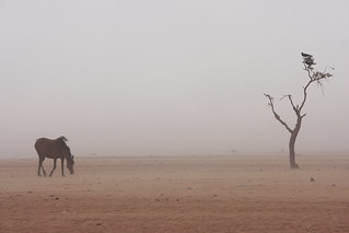 Here to stay: Malian refugees in the Mauritanian desert