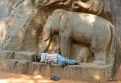 AFTER A DAY'S WORK (GOPAN G. NAIR [ GOPS Photography ]) Tags: india elephant festival rock architecture photography carving mahabalipuram mamallapuram nair mahout gops gopan gopsorg gopangnair gopsphotography