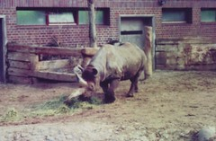 """Rhinoceros in Berlin Zoo • <a style=""""font-size:0.8em;"""" href=""""http://www.flickr.com/photos/9840291@N03/13911692950/"""" target=""""_blank"""">View on Flickr</a>"""