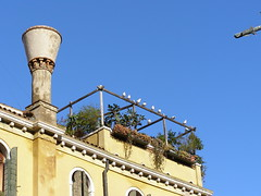 The sky's (not) the limit XX (Daisuke Ido) Tags: venice chimney sky plants house casa camino gulls cielo piante venezia gabbiani altana