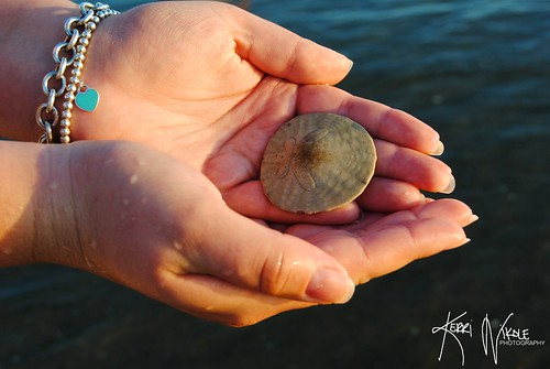 Hunting for Sand Dollars
