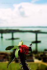 (LomU Grapher) Tags: sea brazil brasil nikon mare ponte vitoria espiritosanto nikond200 lorenzom nikon35mmf18 lomugrapher