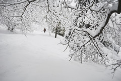 Winter forest (Piligrim_) Tags: road christmas trees winter white holiday snow cold tree tourism ice nature wet leaves weather sport pine forest season landscape foot leaf branch tracks footprints newyear line route trail fir prints recreation needles twigs climate