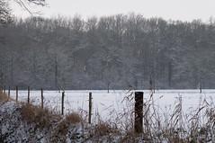 Troapler landschap (Jos Mecklenfeld) Tags: schnee winter snow nature netherlands forest fence walking landscape outdoor hiking wandelen walk sony sneeuw natur nederland natuur sigma hike groningen zaun bos landschaft wald wandern olanda gard landschap niederlande hek terapel nex 3n westerwolde sigmalens peisaj zpad iarn pdure natur nex3 sonynex laea2 sonylaea2 nex3n sonynex3n