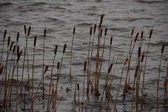 Pitt Lake (Ian Threlkeld) Tags: mountains clouds landscape nikon scenery bc britishcolumbia lakes explore irt pittlake pittmeadows ridgemeadows explorebc d7000
