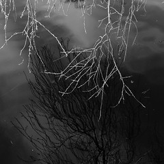 twigsBLACKandLITE (vertblu) Tags: bw distortion abstract reflection water reflections mono spring pond distorted abstraction weepingwillow twigs waterabstract springtime abstrakt abstractnature pondlife transcending 500x500 reflectedclouds verdancy natureabstracted pondsurface reflectedskies mourningwillow verdanttwigs vertblu reflectedtwigs