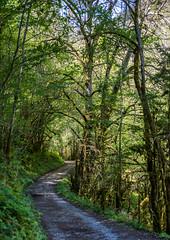 Suivre la route (Collabois) Tags: nikon cairn chemin mousse pyrnes fes fougres d600 randonnes baronnies dryades gourguedasque